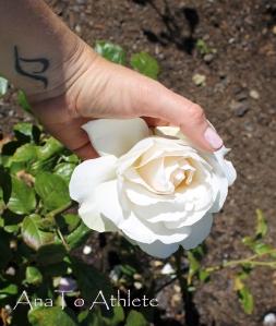 tattoo and white rose